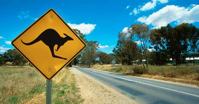 Kangaroo road sign by an empty road