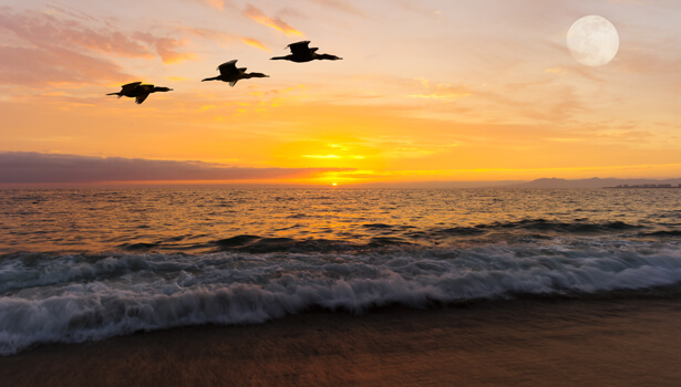 Birds flying with a sunset in background